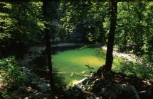 Divje jezero, Zupančič
