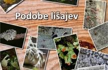 Podobe_lisajev_05