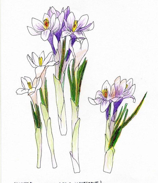 Razcvet_pomladi_00